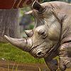 Komplettlösungen zu Zoo Tycoon